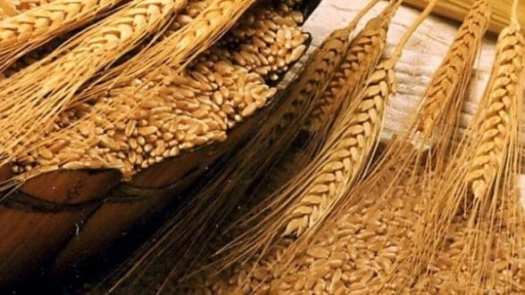 Popescu (Rompan): Evaziunea fiscala va inflori fara taxarea inversa la cereale