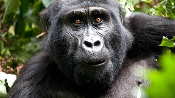 Porneste intr-o vacanta extrema, in 2014: Uganda