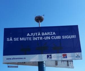 Premiera in Romania: Panourile publicitare vor avea si cuiburi de barza