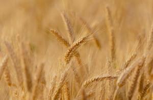 Presedintele Academiei de Stiinte Agricole: Romania sa sisteze exporturile de produse agroalimentare, preturile ar trebui plafonate