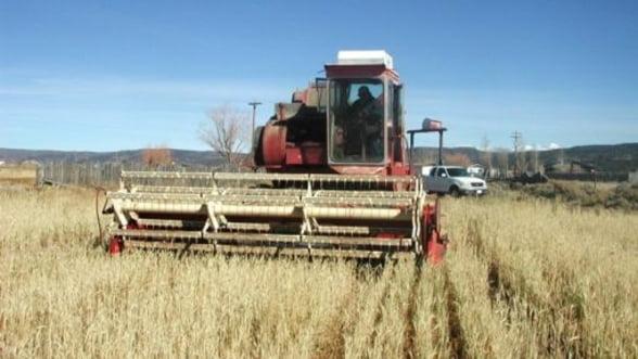 Preturile medii la cereale ar putea scadea in 2013