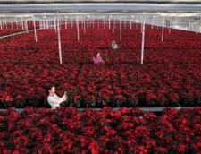 Prima bursa de flori din Europa Centrala si de Est, in Romania