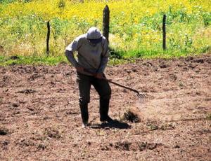 Producatorii agricoli, obligati sa se inscrie la Registrul Comertului pentru a primi ajutor de stat