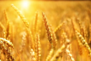 Producatorii agricoli trag un semnal de alarma: Contra-anotimpurile distrug agricultura, productia va fi cu 30% mai mica