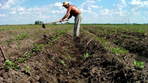 Productia agricola vegetala din Romania a scazut in 2012 la aproape toate culturile