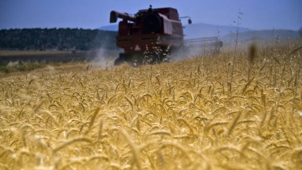 Productia mondiala de grau ar putea atinge un nou record
