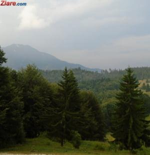 Proprietarii care vor sa-si impadureasca terenurile pot cere statului fonduri nerambursabile de milioane de euro