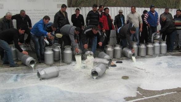 Protest extrem al agricultorilor: Tone de lapte aruncate pe camp