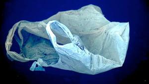 Punga de plastic de unica folosinta, pe cale de disparitie: Cine o interzice