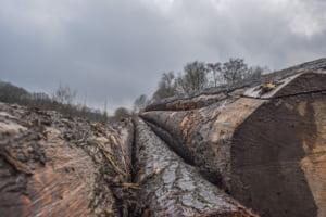 Raport dramatic: 1 din 5 tari ar putea intra in colaps economic din cauza distrugerii ecosistemelor