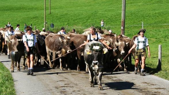 Referendum controversat in Elvetia: efectul va fi salvarea agriculturii sau distrugerea ei totala?