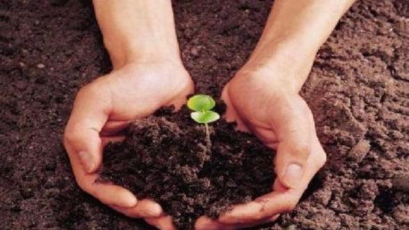 Relansarea economica, posibila prin capital strain si sprijinirea IMM-urilor