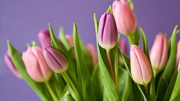 Relaxarea restrictiilor in Europa a relansat sectorul florilor din Kenya