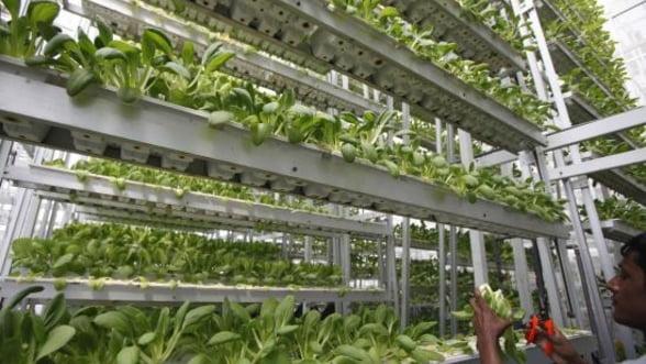 Ridichi si salata verde, marca Panasonic: Producatorul de televizoare s-a apucat de agricultura high tech
