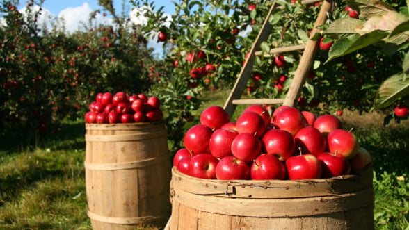 Romania, prima tara din Europa de Est unde s-a lansat platforma digitala de comert agricol Commoditrader