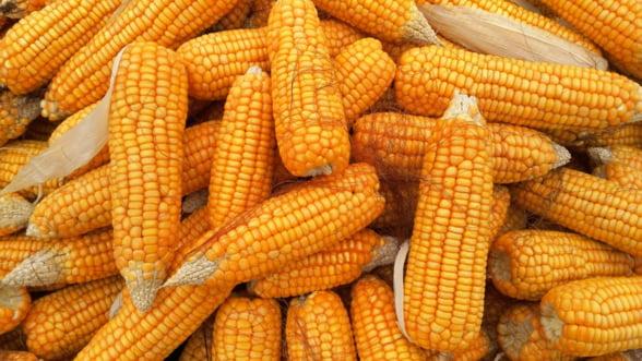 Romania a exportat anul trecut cereale de peste 1 miliard de euro in UE