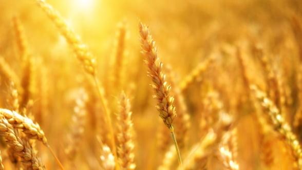 Romania a exportat mai multe cereale decat a importat, in ianuarie