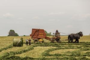 Romania este pe primul loc in UE la populatia care lucreaza in agricultura