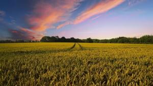 Romania inregistreaza cel mai bun rezultat agricol din istorie - analiza KeysFin