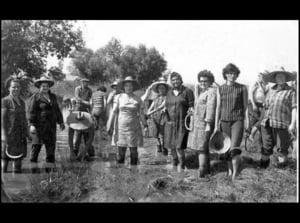 Romania se intoarce la cooperativele agricole