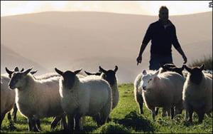 Romania sustine constituirea unui fond comunitar pentru asigurarea veniturilor fermierilor