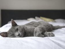 Romanii prefera un dormitor calduros, cu temperaturi de peste 20 de grade Celsius, indiferent de anotimp (studiu)