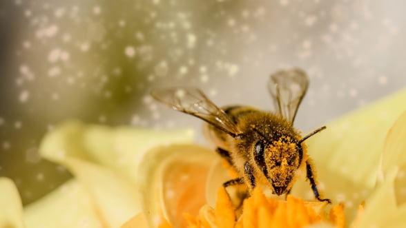 Romapis cere eliminarea pesticidelor sintetice din agricultura: Natura asa cum o stim noi astazi se afla la limita colapsului