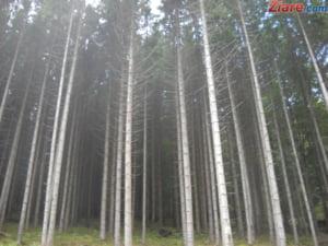 Romsilva acuza: Raportul Consiliului Concurentei pe piata lemnului este eronat