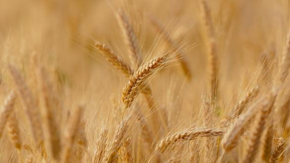Rusia a recoltat 110 milioane tone de cereale in acest an