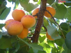 Rusia a ridicat interdictia de import de fructe din R. Moldova