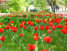 Rusia interzice importurile de flori din Olanda