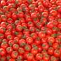 Rusii asteapta o iarna grea si dau unda verde importurilor de rosii din Turcia, in ciuda problemelor dintre cele doua tari