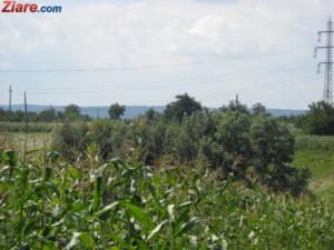 Sa nu ne mai plangem de ploaie - se anunta cel mai bun an in agricultura din ultimul deceniu