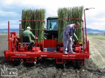 Salcia energetica: profit din biomasa