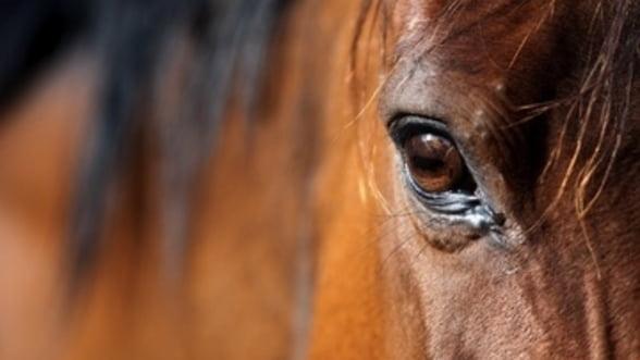 Scandalul carnii de cal devine global. Cat pierd retailerii