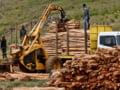 Schweighofer: Pretul lemnului romanesc e nerealist, scoate industria lemnului din competitia internationala