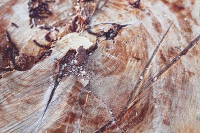 Schweighofer a ramas fara certificarea internationala pentru lemnul taiat din padurile Romaniei