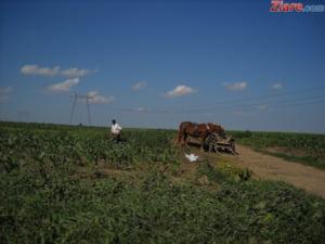 Se schimba regulile pentru vanzarea terenurilor agricole. Instrainarea lor este interzisa timp de 15 ani