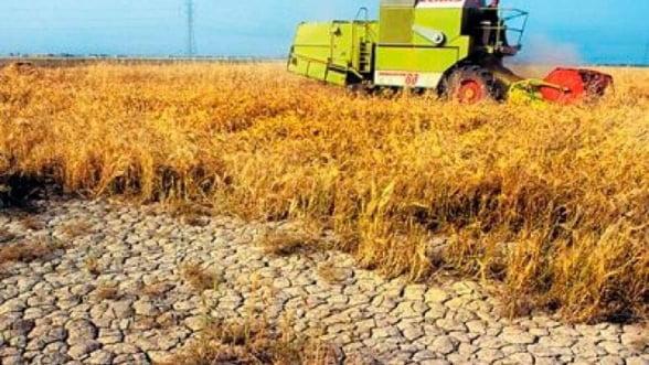 Seceta a distrus agricultura din Iasi: Culturile de grau si porumb sunt compromise