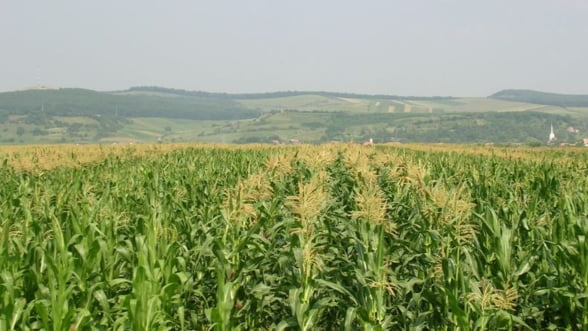 Seceta afecteaza productia de cereale in sudul si estul Europei