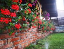 Sere Flori Mihaiesti este eshopul de unde puteti comanda plante pentru amenajarea gradinii