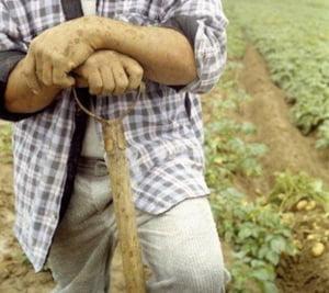 Sprijinul financiar dat producatorilor agricoli in T4 din 2010 a fost de 705 mil.euro