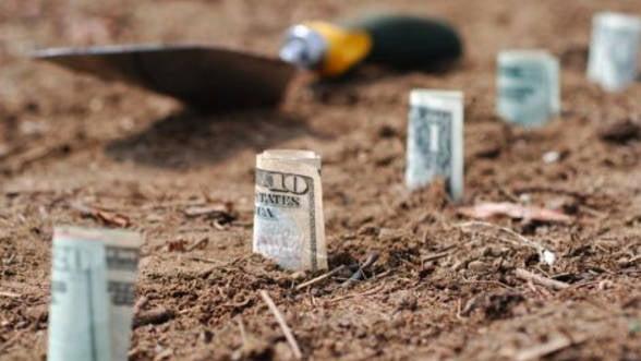 Start-up-uri de succes: trei idei de plantatii profitabile in agricultura. Vezi care sunt