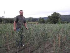 Startup: Goji, o planta medicinala in care investesti putin si scoti un profit sanatos
