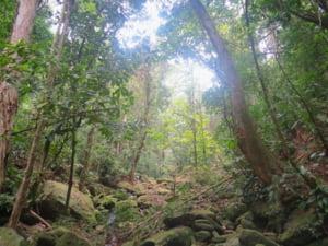 Sute de hectare din padurea amazoniana se vand ilegal pe Facebook. Cum sunt incurajate vanzarile terenurilor triburilor indigene