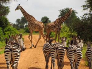 Tanzania, o destinatie ideala pentru coronasceptici: pe cat de exotica si ieftina, pe atat de periculoasa