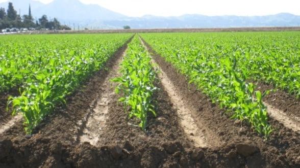 Terenurile agricole, apetisante pentru investitorii straini. Ne vindem tara?