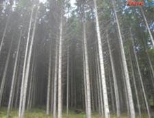 Top 10 cele mai mari companii din industria lemnului