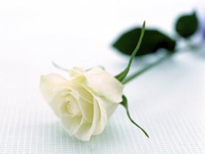 Tot ce trebuie sa stii despre planificarea unei inmormantari
