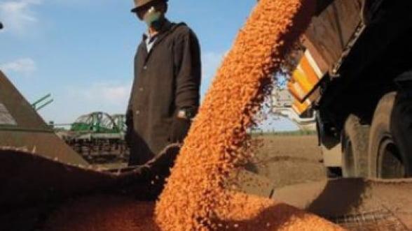 Traderii de cereale, speculantii care tin artificial pretul jos